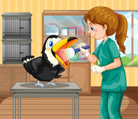 A Vet Doctor Checking a Hornbill