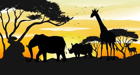 African Savannah Silhouette Sunset Scene