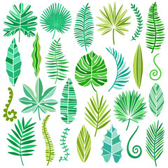 Vector tropical leaves set isolated on white