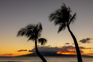 Palm Trees Silhouetted in a Scenic Maui Sunset