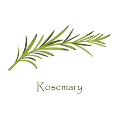 branch of rosemary on white