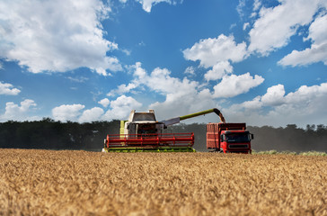 Wall Mural - Combine working on a wheat field. Combine harvester in action on wheat field.