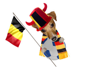 Cute jack russel dog supporter football for champion belgium