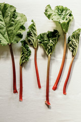 Rhubarb red stalks with large green leaves on white background. View from above, vertical.