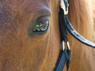 Eye of brown horse