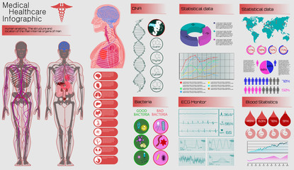 Medical Infographic Set. Human Anatomy, Body With Internal Organs. Illustration of Heart Scan, Human Body, Electrocardiogram, DNA, Arteries and Bervous System. Medical Infographic Vector Illustration