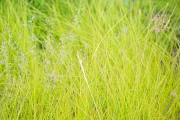 Saftig grüne Wiese mit Grasbüscheln in Nord-Island / Hintergrund