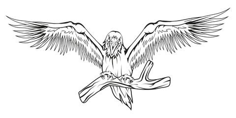 Raven. Hand drawn raven. Sketch of raven head. Vector artwork.
