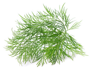 single twig of dill isolated on white background
