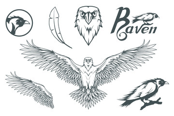 Hand drawn of the raven. Wild birds drawing. Raven logo. Vector graphics to design.