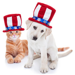 Patriotic American Pet Dog and Cat for July 4th and Memorial Day