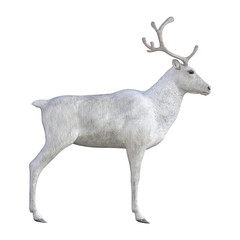 Reindeer isolated on white, 3d render.