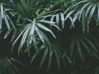 tropical green leaves in summer garden