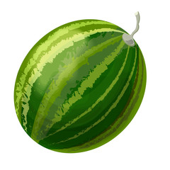 Vector drawing of a watermelon on a white background