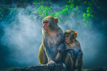 Monkeys in the fog