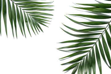 Tropical palm tree leaf on a white background. Minimal concept