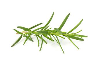 Fresh raw Rosemary isolated on a white background