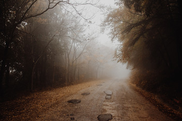 Beautiful view of a road in the middle of fog, with trees at the sides and leaves on the ground