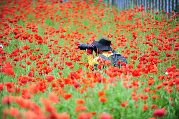 A photographer taking pictures in a flower garden