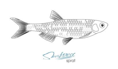 Sprat sketch vector fish icon. Isolated marine atlantic ocean sprats. Linear silhouette sea fish.