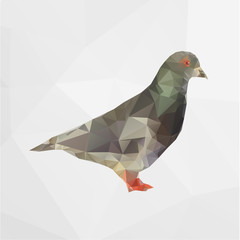 Vector illustration of polygonal pigeon bird isolated on geometric white background.