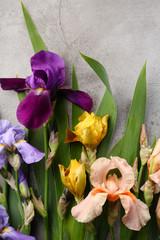 iris flowers top view