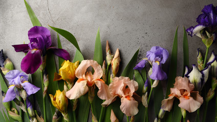 Fresh iris flowers top view on gray