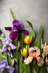 Fresh iris flowers on gray