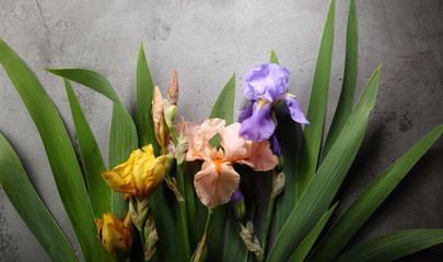 Colorful iris on gray background