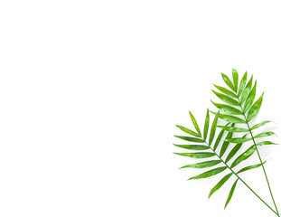 Palm leaves isolated white background Floral flat lay