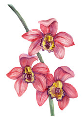 Watercolor red orchid bouquet on white background