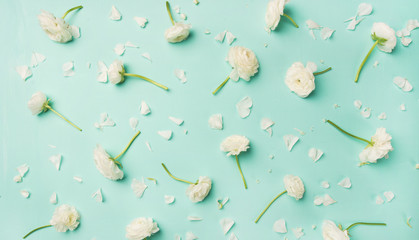 Floral texture, pattern or wallpaper. Flat-lay of white ranunculus flowers over blue background, top view, wide composition. Greeting card or wedding invitation concept