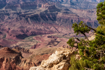 Grand Canyon National Park, Arizona, USA: Lipan Point. View of the canyon and Colorado River only (without sky) with tree in foreground.