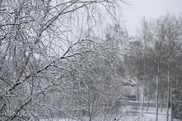 tree branches covered with snow