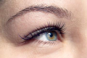 Beautiful macro shot of female eye with extreme long eyelashes. Cosmetics and make-up. Closeup macro shot of fashion eyes visage