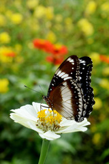 the flower butterfly
