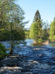 Fototapete - Swedish river and natural salmon area in spring.