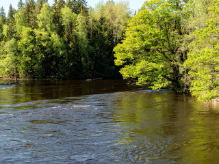 Wall Mural - Swedish river and natural salmon area in spring.