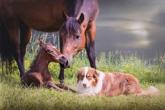 Fohlen mit Mutter und Hund