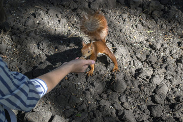 Human gives to the squirrel a nut.