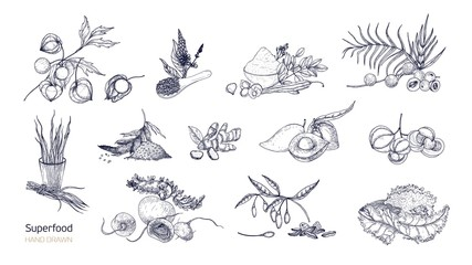 Set of detailed drawings of superfoods. Fruits, berries, seeds, root crops, leaves and powder drawn with contour lines on white background. Healthy and wholesome food. Monochrome vector illustration.