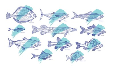 Set of fish hand drawn with contour lines against blue paint smear or brush stroke on background. Bundle of underwater animals living in sea, ocean, river, lake. Vector illustration in woodcut style.