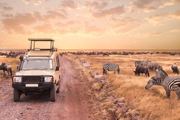Game drive safari in Serengeti national park,Tanzania Wall mural