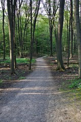 Isolated image of a beautiful trail leading