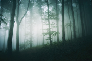 tree in foggy forest fantasy landscape