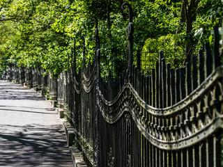 Fußweg an einer Allee