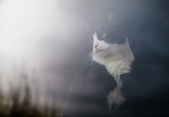 Beautiful cat looking out the window