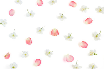 Floral pattern.White cherry flowers and pink rose petals on white background