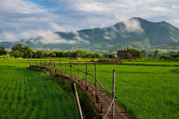 Wooden bridge and rice field in Thailand