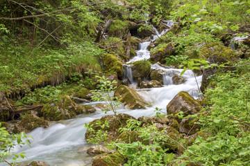 Hinterstein - Gebirgsbach - Wasser - Wald - Alpen